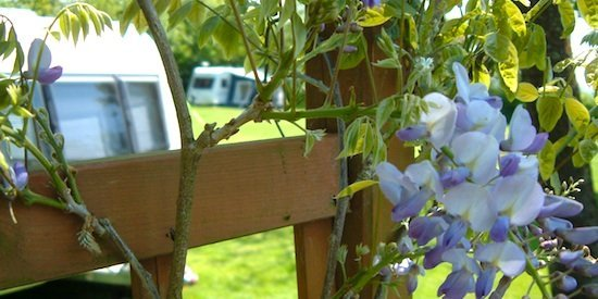 Campsite through spring flowers